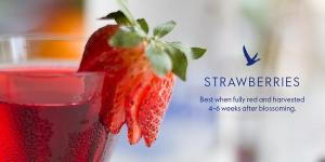 Grey goose strawberries