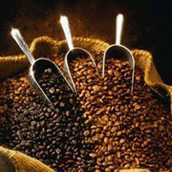 Kahlua coffee beans