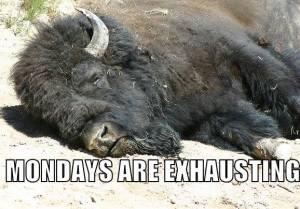 Buffalo monday
